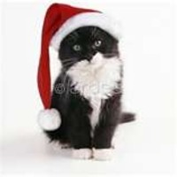 Cat Wearing Christmas Hat.bmp