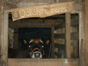 Oakshire profile picture