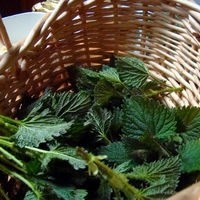 Nettle Workshop (4a).JPG