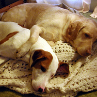 Doggies_11_2011.jpg
