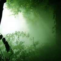 free-pictures-green-forest-sunshine-bbsc30.jpg