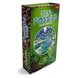GeoCentral Excavation Dig Kit - Fossils