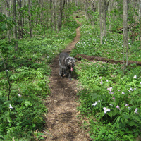 On the Appalachian Trail, Spring 2008