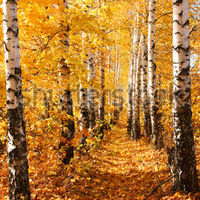 stock-photo-birch-autumnal-alley-sun-weather-nature-background-19270672.jpg