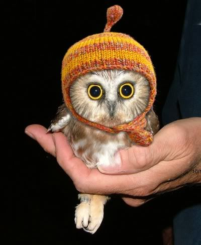 owl with hat.jpg