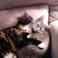 kitties cuddling2.jpg