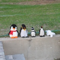 Penguins at the beach 450.jpg