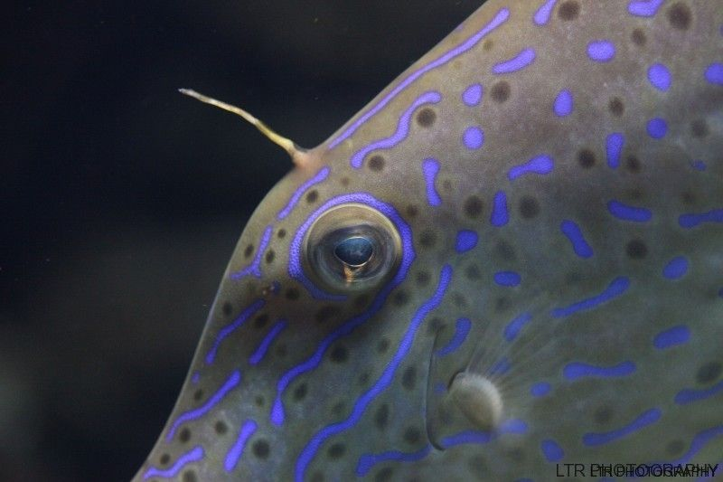 scrawled-filefish-face.jpg
