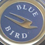 bluebirdmama profile picture