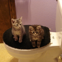 More Kitties016.JPG