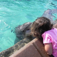 Dolphins give kisses when you feed them fishy treats.