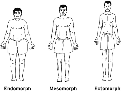 body-types-bodybuilding-ecto-meso-endo-classify.png