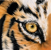 TigerMama09 profile picture