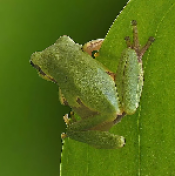 TinyFrog profile picture