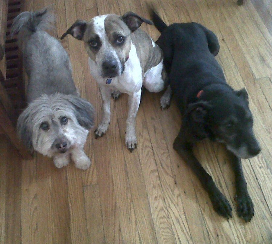 Our three dogs!