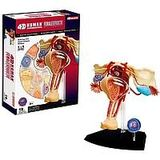 Tedco Human Anatomy - Female Reproductive System Model