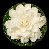 bohogardenia profile picture