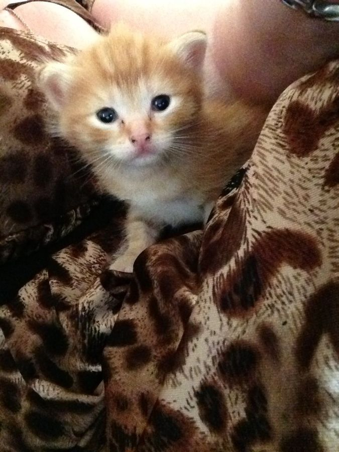 My kitten's kitten at around 2.5 weeks old.