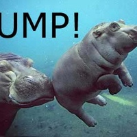 hippo_bump.jpg