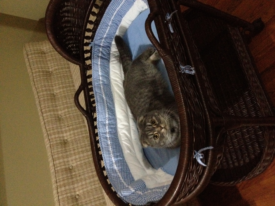 kitty in cradle.jpg