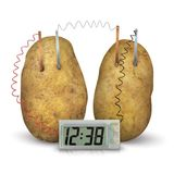 Toysmith 4 M Potato Clock # 4568