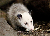 VacuousOpossum profile picture