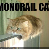 funny-pictures-monorail-cat1.jpg?w=400&h=300