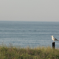 lbi 2012 053.JPG
