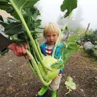 I had to help hold this giant kohlrabi, it was too heavy for Katmai.