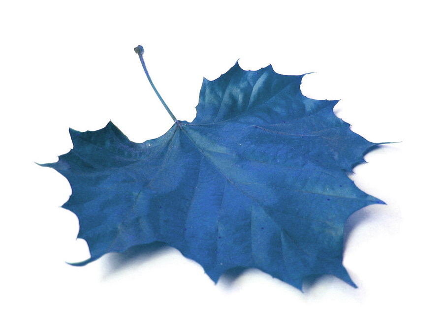 fall-leaf-01.jpg