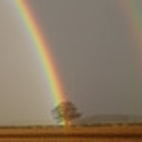 rainbow on tree.JPG